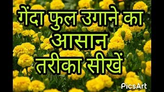 how to grow marigold from seed | Flower Seed planting| How to grow seed from Seedling tray| hindi