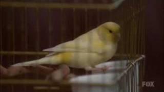 Glee - Blackbird - Lyrics