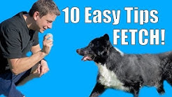 10 Easy Tips for Teaching your Dog a RELIABLE Fetch!