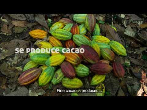 Cacao in Honduras