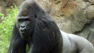 2.Америка.Зоопарк в Далласе-Огромнейшие пространства! и прекрасные условия для животных-ч.2.