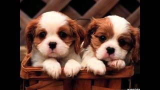 30 ноября Всемирный день домашних животных