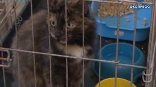 Бездомных животных в Пензе скоро может стать больше