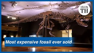 Stan the T-Rex becomes the most expensive fossil ever sold