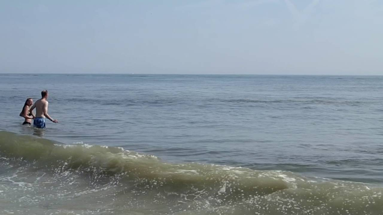 Dolphins Swim At Virginia Beach Oceanfront