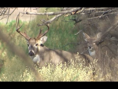 INSANE WHITETAIL ARCHERY KILL SHOT!!| CHAD MENDES' FINZ AND FEATHERZ