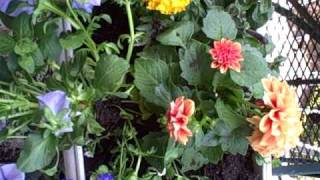 How To Create Lush Container Garden Window Boxes