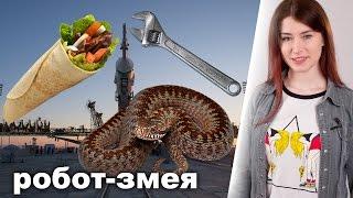 Ложь и правда о московской шаурме
