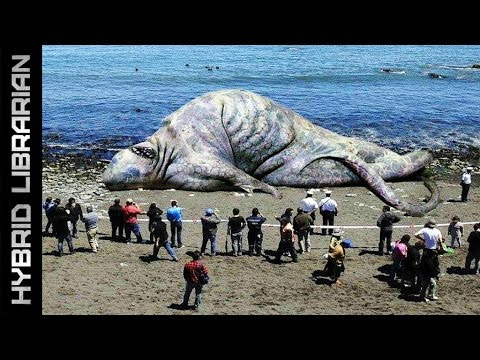 Video The 10 Most Mysterious Sea Monster Carcasses Ever Found