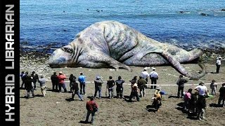 Repeat youtube video The 10 Most Mysterious Sea Monster Carcasses Ever Found