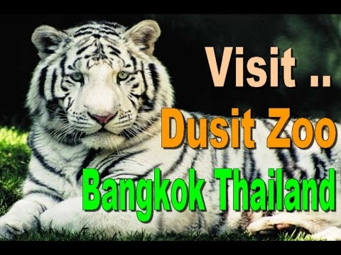 DUSIT ZOO - Top Ten Tourism in Bangkok Thailand [HD]