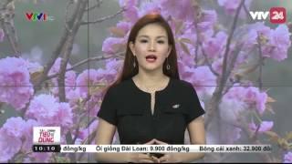Lễ hội hoa anh đào được tổ chức tại hồ Hoàn Kiếm, Hà Nội | VTV24
