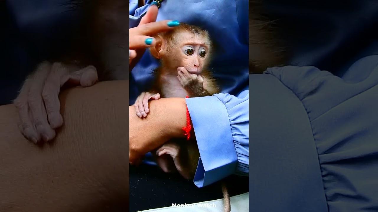 Cute Baby Monkey, New Cute Baby Monkey