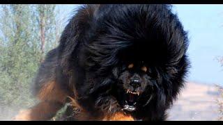 Топ 10 лающих собак \ funny animals video