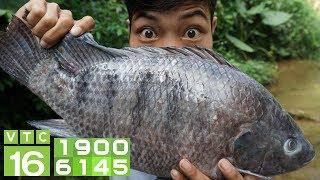 Cơ hội kiếm tiền tỷ nuôi cá rô phi xuất khẩu | VTC16