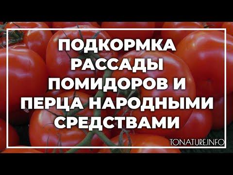 Подкормка рассады помидоров и перца народными средствами | toNature.Info | размножение | ухаживать | вырастить | условия | помидор | домаш | дома | как | в