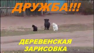 Дружба кошек с собакой.