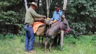 Donkey Packing - www.mountainridgegear.com