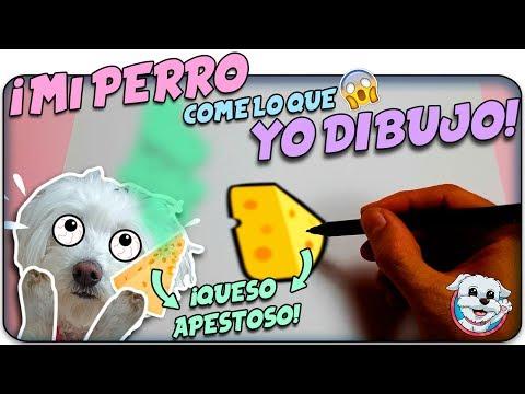 Mi PERRO COME lo que sea que YO DIBUJE!✏️ Como Queso apestoso!🧀🐶 Anima Dogs