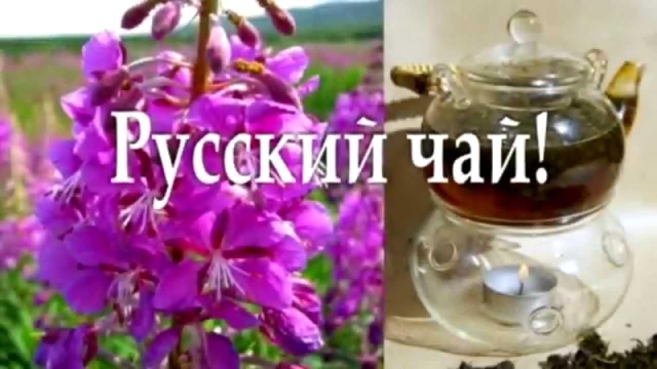 Малышева о монастырском чае от простатита занятие для профилактики простатита