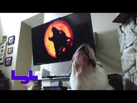 Callie the Pitbull Sings Werewolves of London - Karaoke