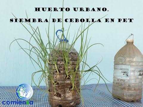 huerto urbano. siembra de cebolla en pet - youtube
