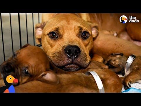 Mother Dog Keeps Her Pups Safe During Hurricane - ABILENE | The Dodo