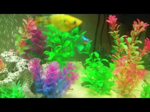Interpet Fish Pod