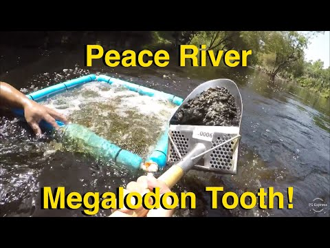 Peace River Megalodon Tooth! We Finally Found A Meg! Fossil Hunting! Things To Do In Florida!