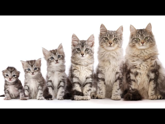 Kitten to Cat super fast time lapse