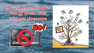 How To Catch Crappie Out Of Brush Piles Without Livescope