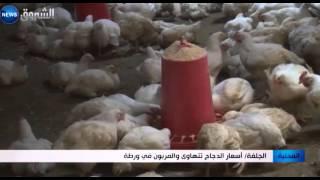 الجلفة: أسعار الدجاج تتهاوى والمربون في ورطة