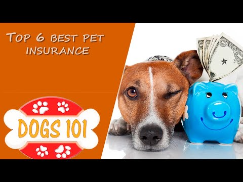 Top 6 Best Pet Insurance