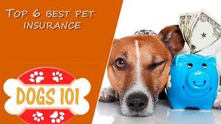 Top 6 Best Pet Insurance