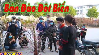 Bán Đào Đột Biến - Phim Hài Tết 2021 A Hy Mới Hay Nhất Cười Vỡ Mồm