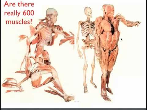 Tom Myers Anatomy Trains In Rehabilitation And Fitness Youtube
