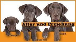 Das Alter des Hundes in der Hundeerziehung / Entwicklungsphasen des Hundes / Von Welpe bis Senior