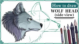 How to draw a WOLF HEAD (side view) - Mink