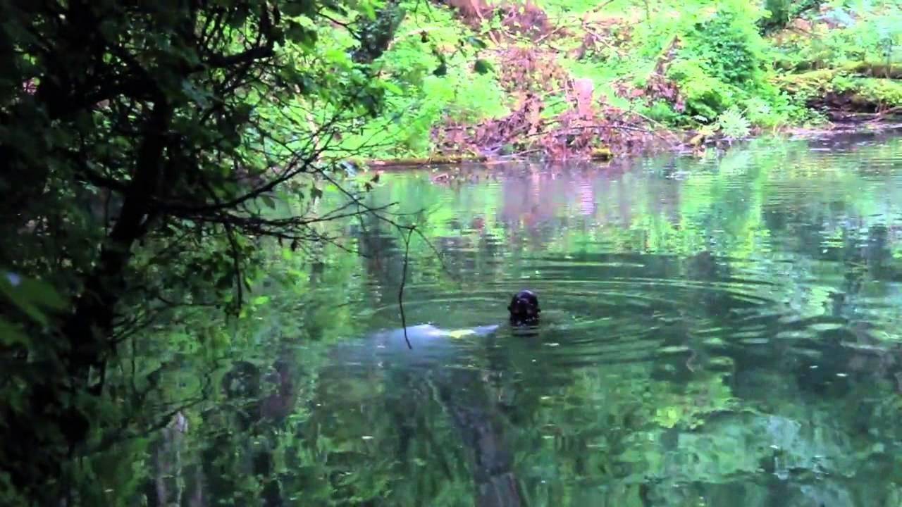 Faire de la plongee en riviere