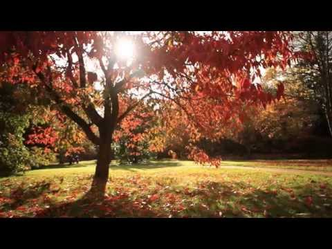 Visiting Windsor Great Park in Autumn