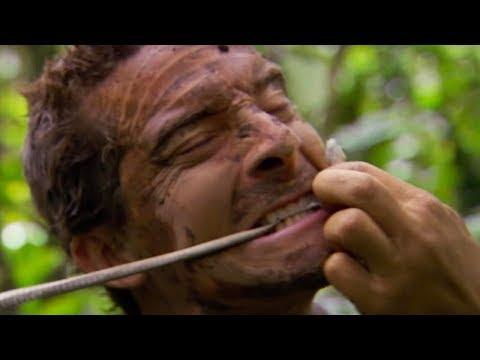 生きたヘビを食べる方法  | サバイバルゲーム #ディスカバリーチャンネル