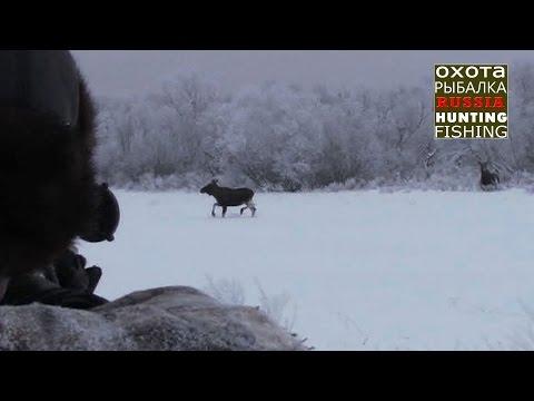 Охота на лося,