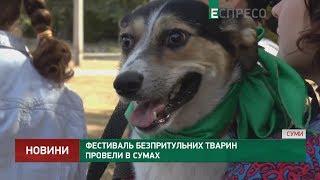 Фестиваль безпритульних тварин провели в Сумах