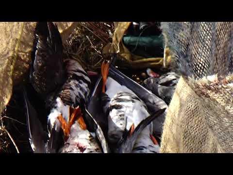 07.04.2020 г. охота на гуся .