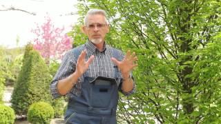 видео Декоративные растения