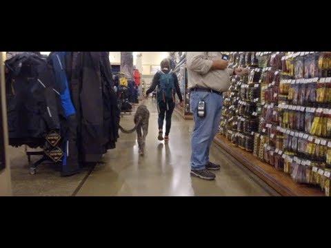 Best Dog Training in Columbus, Ohio! 6 Month Old Irish Wolfhound, Luna!