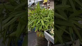 경기광주에도 이런꽃집이 있어요 식물이 필요할땐 광주화훼…