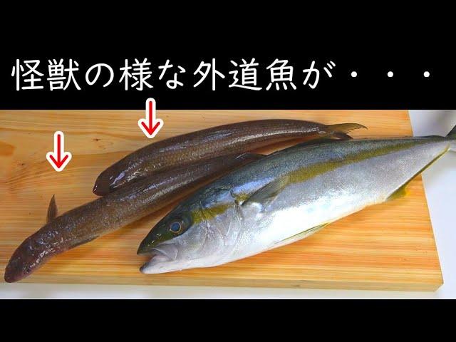 #2 釣り人が嫌う外道エソ、実は美味しいんです。