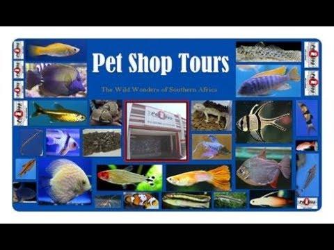 Pet Shop Tours - Pet Stop SA (In HD)