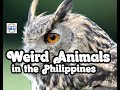 Animals in the Philippines